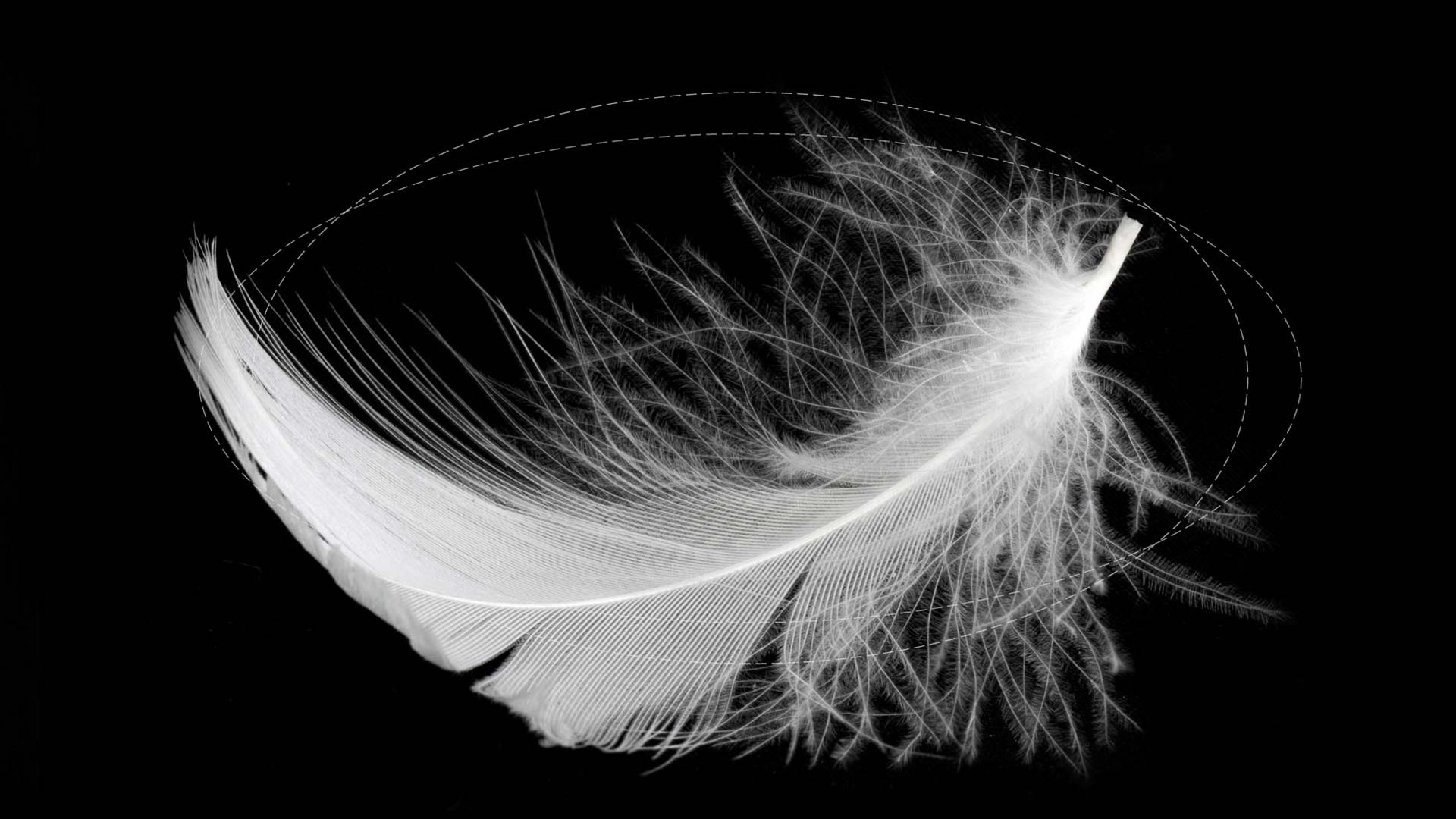 Unlimity Feather